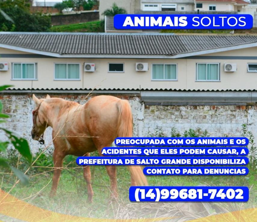 Atenção com animais soltos.